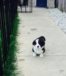 Cash is my favorite boy. If I was only keeping another boy. He is a confidant, and very biddable. Nothing seems to shake him, and he  is a very much a people person!