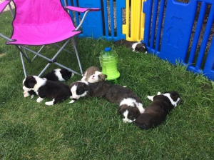 Post puppy party.