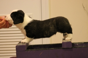 This is not a good photo of Ace, but it's something. He wanted to lay down on the stacking box!